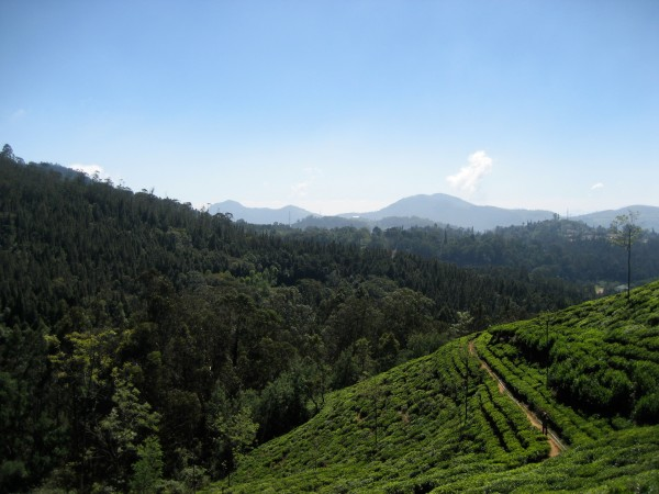The paths and green hills of the Nilgiris Mountains.