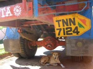 dog chilling under a truck.