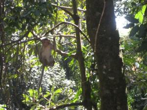 monkey swinging in a tree.